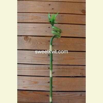 Искусственный бамбук ветка, 75 см