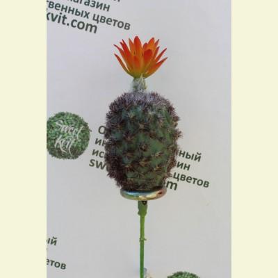 Искусственный кактус, 23 см