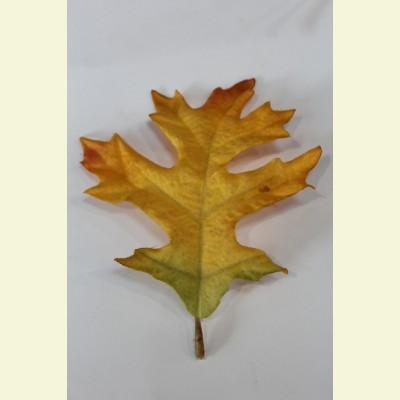 Искусственный лист дуба, 13 см